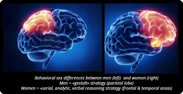 Brain difference in picture sex